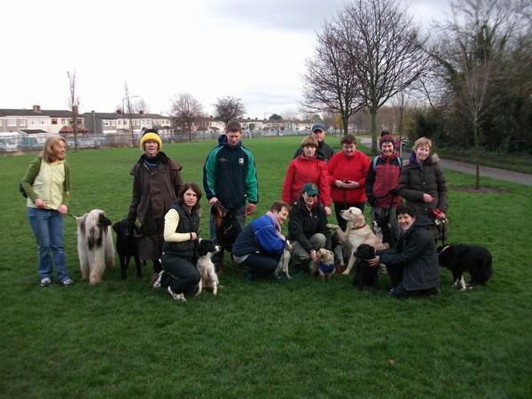 Dog Agility Training Dublin